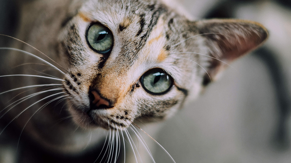 Tips on How To Get Your Furry Cat Friend Into Their Carrier