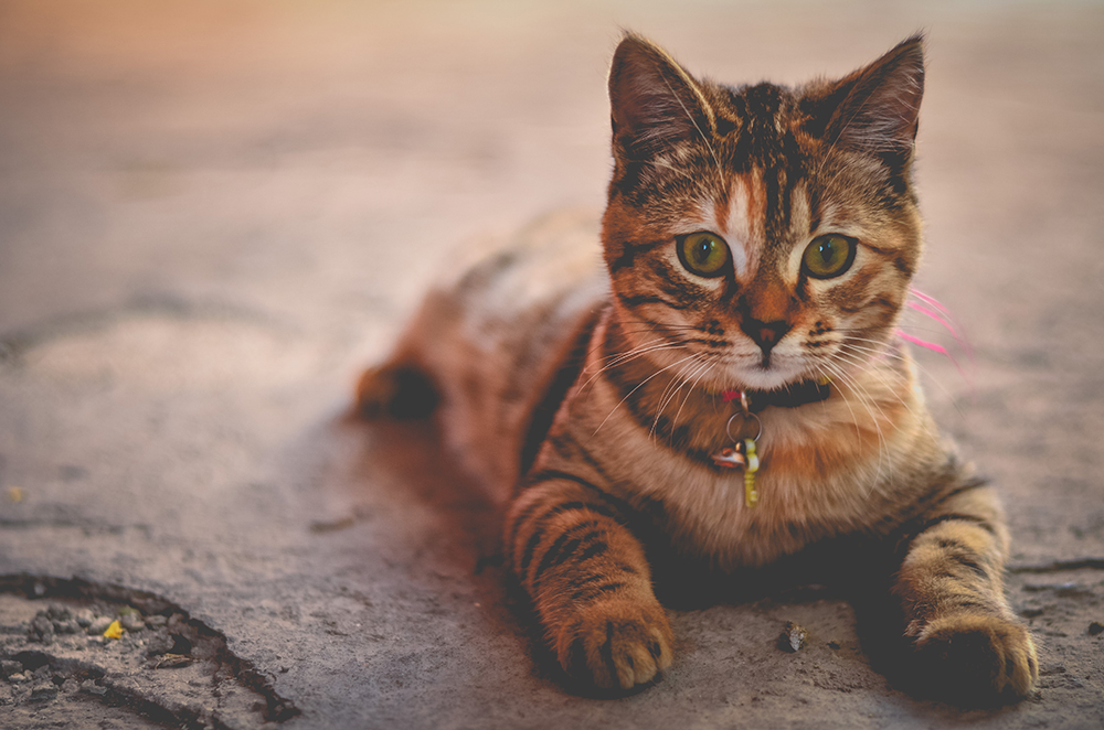 Litterbox Problems with Your Cat and How to Fix Them